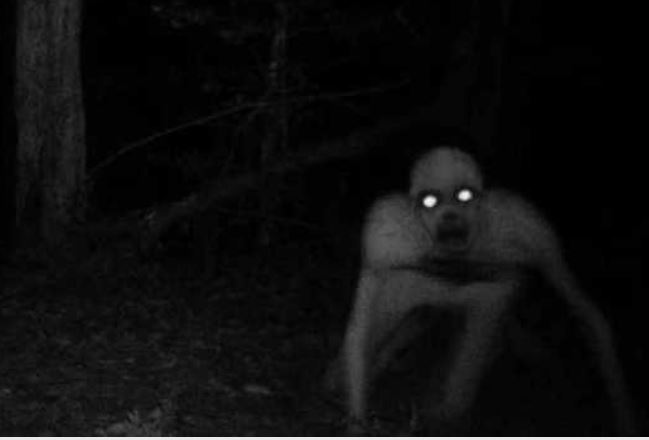 Photo Of A Scary Creature Raping Women In KiambuPhotoRun If You